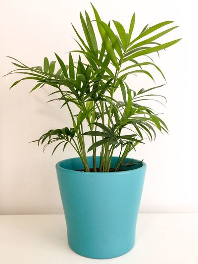 Growth Potted Plant Plant Green Color White Background No People Leaf Nature Studio Shot Indoors  Freshness Close-up Day