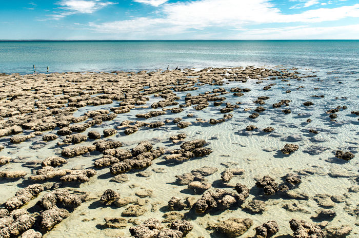 Australia Beach Beauty In Nature Cloud - Sky Day Hamelin Pool Horizon Over Water Makes Oxygen Nature No People Outdoors Scenics Sea Shore Sky Stromatolites Stromatolites Cyano Bacteria Tranquil Scene Tranquility Water Western Australia The Great Outdoors - 2017 EyeEm Awards Neighborhood Map in Hamelin Pool, Australia The Photojournalist - 2017 EyeEm Awards