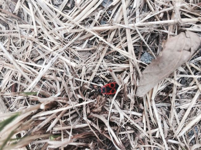 Animal Themes Animals In The Wild Close-up Nature Outdoors Tranquility Leaves Branches Red Black Brown Ladybug Bug
