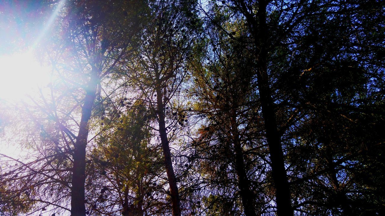 tree, nature, low angle view, forest, growth, beauty in nature, tranquility, day, sunbeam, outdoors, sunlight, no people, tree trunk, tranquil scene, branch, sky, scenics