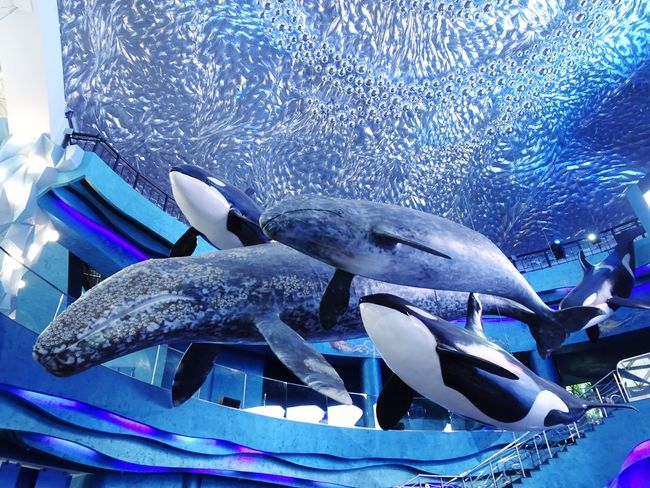 Feel like being in the water🌊 🐡🐠 Water Aquarium Under The Sea Blue Sea Fish UnderSea Dive Ocean Blue Ocean Blue Sky Fun! UnderSea Sea Life Swimming Aquarium Scuba Diving Water Sea Multi Colored Blue Whale Shark School Of Fish Saltwater Fish Fish Tank Dolphin Shark Reef Goldfish Stingray