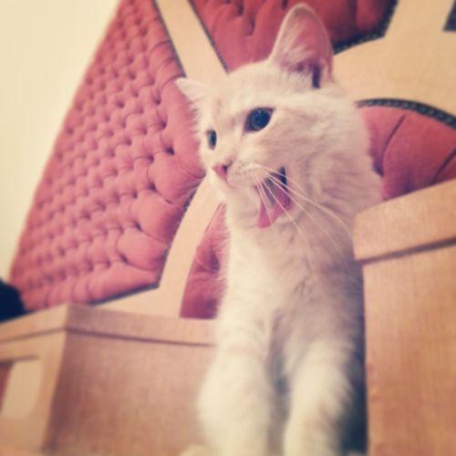 Cat Pet My Pet Cute Cat