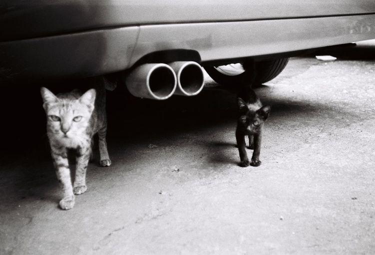 cat (Film)