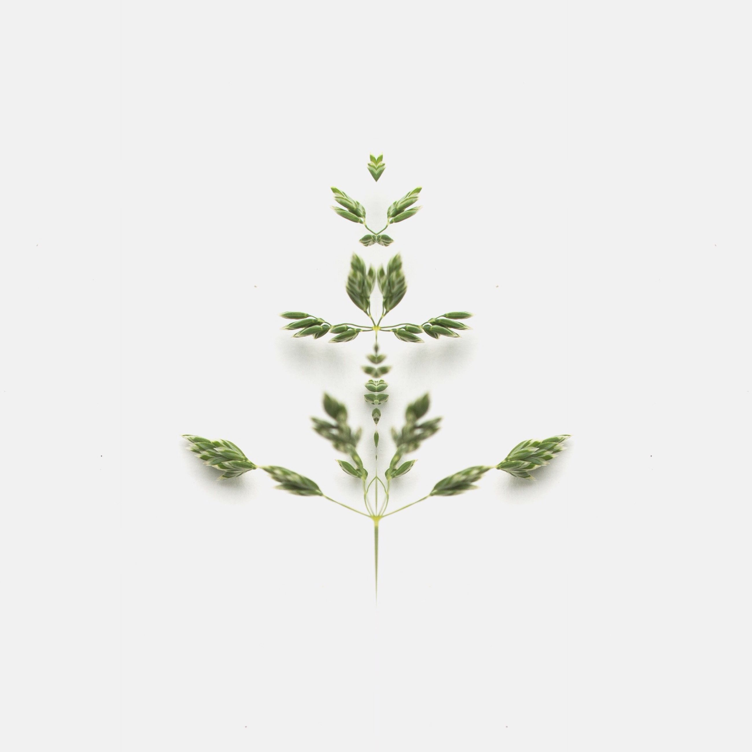 copy space, white background, leaf, studio shot, growth, green color, plant, nature, clear sky, beauty in nature, freshness, stem, green, close-up, no people, growing, tranquility, cut out, day, botany