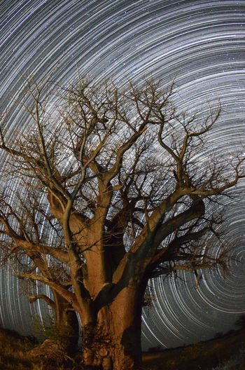 Bains Baobab Star Trail Bains Boabab Botswana Astronomy Bare Tree Beauty In Nature Branch Concentric Day Nature No People Outdoors Scenics Sky Star Trail Tranquil Scene Tranquility Tree Water