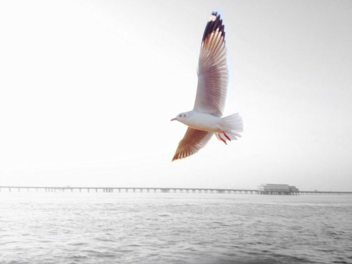 Arabiansea Bird India Iphonephotos Mum Mumbai Sea Water Weather White Bird Seagulls And Sea Need For Speed