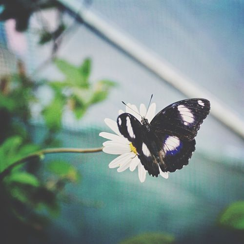 Flower Fragility Nature Freshness Beauty In Nature Insect One Animal Growth Close-up Animal Themes No People Plant Animals In The Wild Flower Head Outdoors Day Butterfly - Insect Blooming Pollination