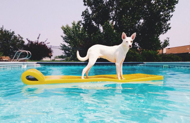 Summer fun Dog
