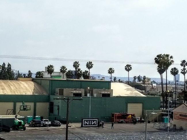 Rear view of Hollywood Palladium Palm Tree Tree Sky