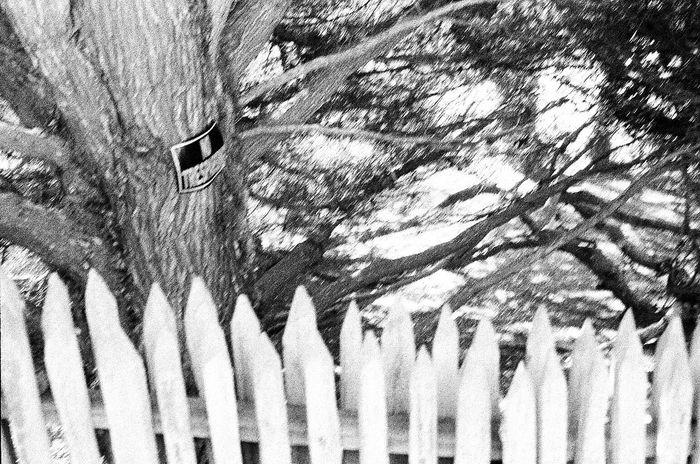 No People Carmel California Fence Grainy Photo Blknwht Ilford Delta 3200 NATURA Classica Film Koduckgirl Outdoors