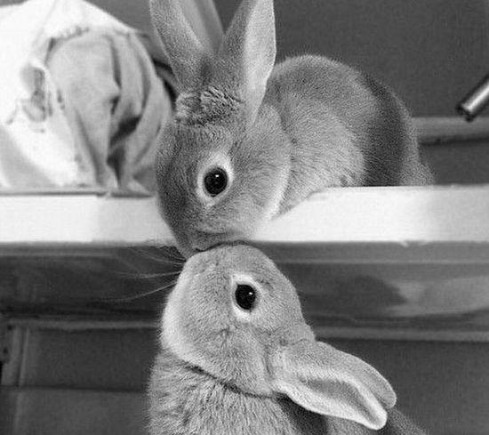 Bunny Love <3 Bunnys Bunny 🐰 *_*