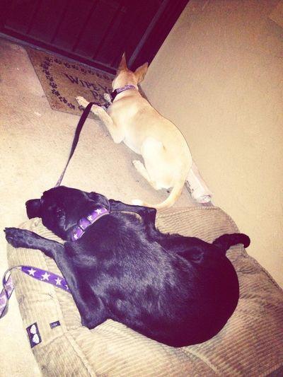 Chillin Pups