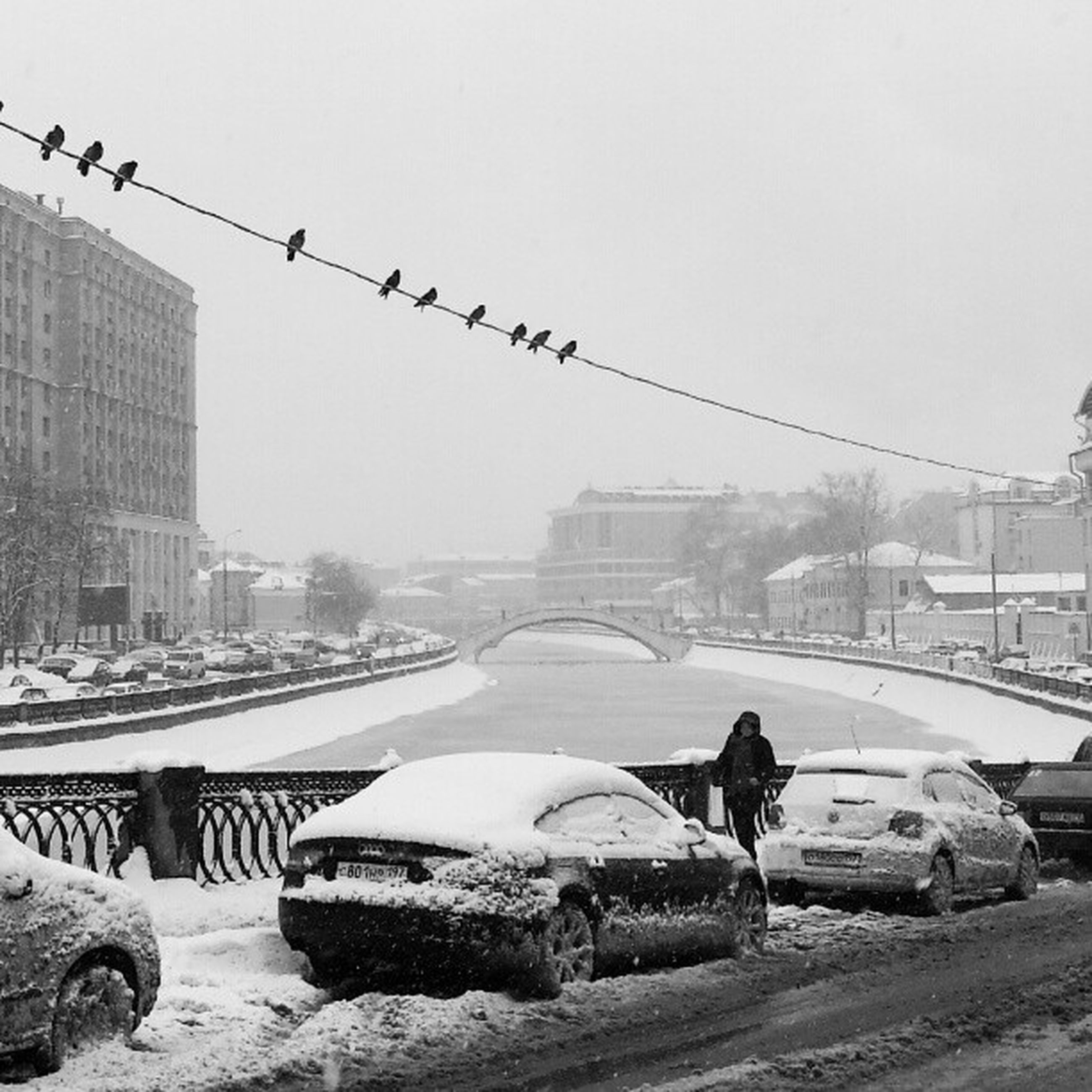 bird, building exterior, built structure, architecture, animal themes, transportation, clear sky, city, animals in the wild, mode of transport, wildlife, car, flying, copy space, day, incidental people, winter, land vehicle, street