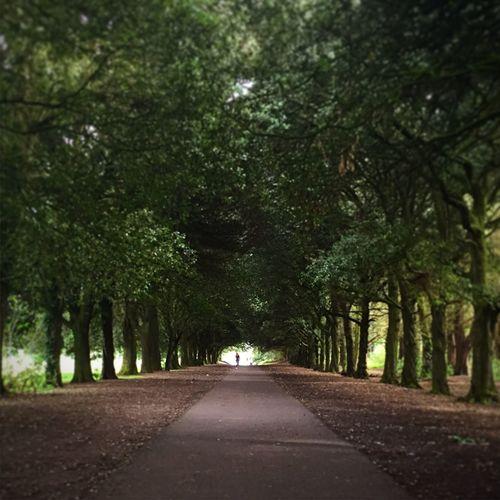 Park Raheny StAnnesPark Nature Landscape Landscape_Collection