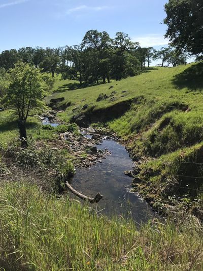 Free Range Pasture Land Pasture, Paddock, Grassland, Pastureland Creek Tree Nature Growth Grass Tranquility Landscape Tranquil Scene Water Outdoors Green Color
