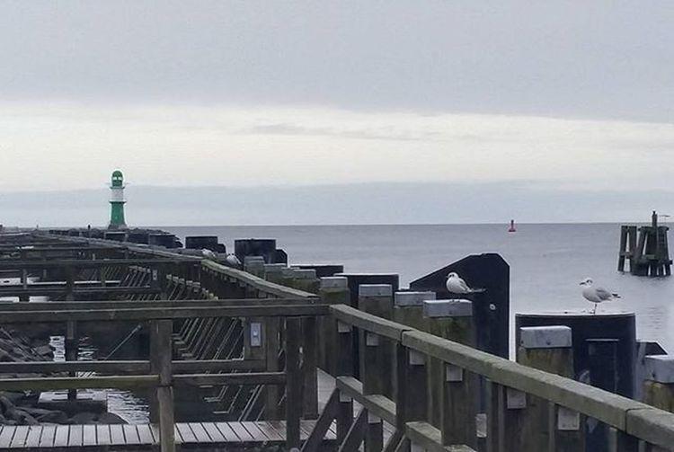 Morze Bałtyk Latarniamorska Mewy Alki Familtytime Rostock Portowemiasteczko Germany