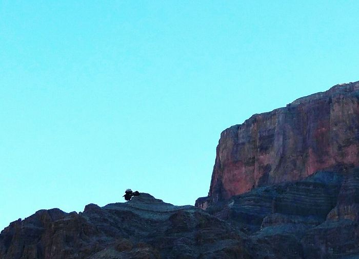 Bird flying in the Grand Canyon