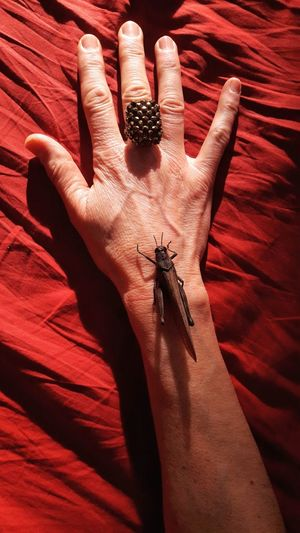 Grasshopper on my skin Textile Portrait Of A Woman Woman Portrait One Person Personal Perspective Part Of Body Insect Insect Photography Grasshopper Human Hand Fingernail Red Palm Spooky Close-up Dragonfly Insect Ladybug Finger Ant Animal Antenna