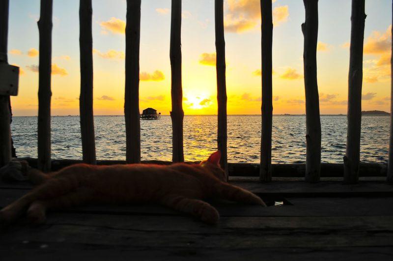 Sunrise Summer Sunlight Orange Illustration Sunrise_sunsets_aroundworld EyeEm Selects EyeEmBestPics Mood Cute Pets Water Sea Sunset Pets Beach Lying Down Silhouette Domestic Cat Sky Horizon Over Water Scenics Idyllic