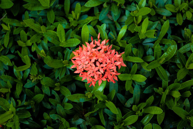 Close up Spike flower Spike Flower Beauty In Nature Blooming Close-up Day Flower Flower Head Fragility Freshness Green Color Growth High Angle View Leaf Nature No People Outdoors Petal Plant Red Zinnia