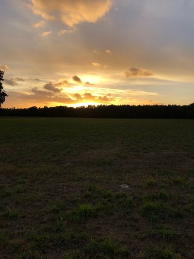 Sky Sunset Cloud - Sky Tranquility Scenics - Nature Tranquil Scene Field Landscape Environment Land Beauty In Nature Plant Nature Agriculture Growth No People Rural Scene Tree Grass Orange Color