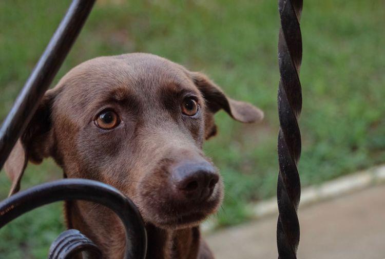 One Animal Animal Animal Themes Mammal Dog Canine Vertebrate Domestic Animals Pets Looking Portrait Boundary Barrier
