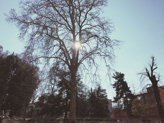 Tree Low Angle View Sky Nature Bare Tree No People Outdoors Growth Sun Beauty In Nature Branch Day