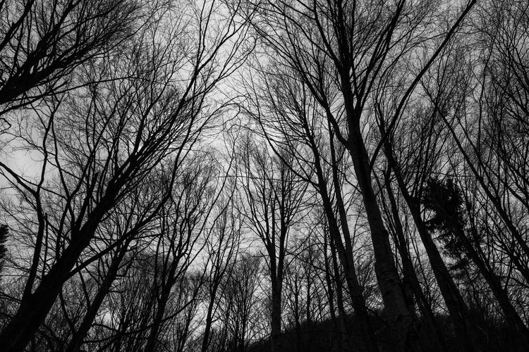 Italy in black and white. FILIPPI GIULIA PHOTOGRAPHY.bran Bare Tree Blackandwhite Branches Canon Cold Day Forest Grid Growth Italy Light And Shadow Nature No People Outdoors Pattern Photographer Photography Scenics Silhouette Sky Streetphotography Tranquility Tree Wild Wood