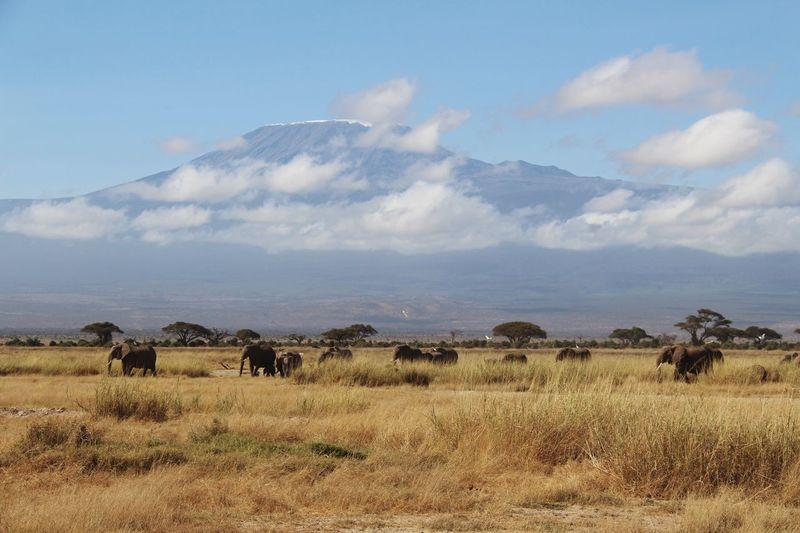 Elephant family on grassland against sky