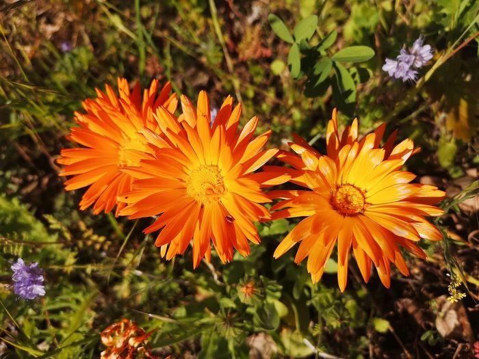 Close-up of orange flower in field