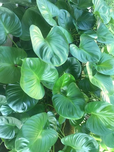 Growth Plant Leaf Plant Part Green Color Full Frame Beauty In Nature No People Nature Freshness Natural Pattern Vulnerability  Outdoors Fragility Backgrounds Flower Lush Foliage Close-up Day Tranquility