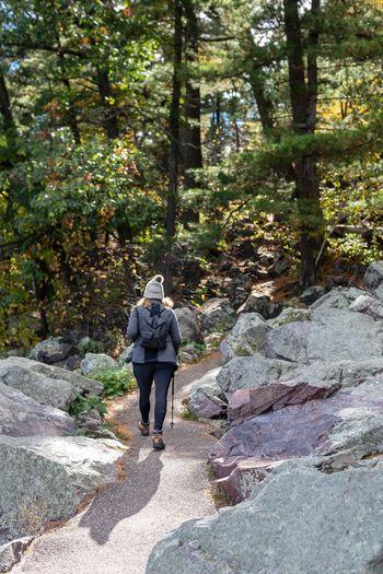 Rear view of friends walking on rock in forest
