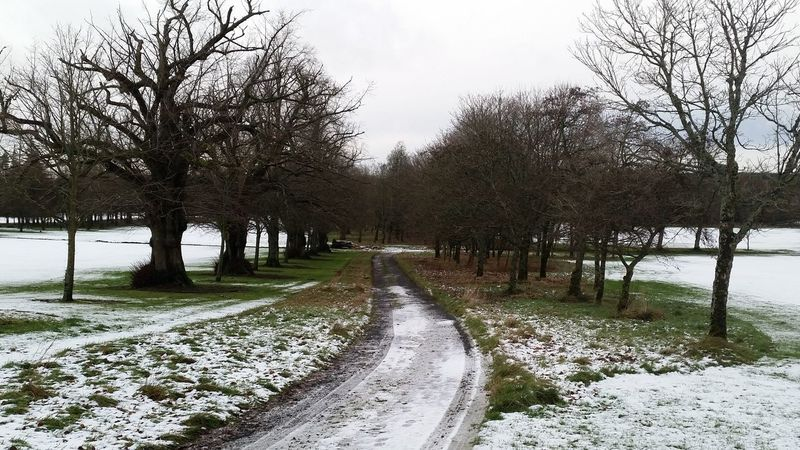 Golfcourse Winter Trees Road