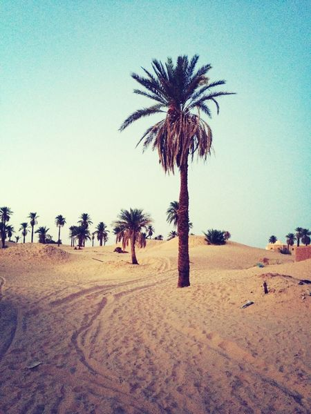 Landscape Algeria Sahara Desert