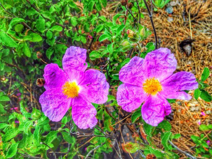 Bestphoto Hello World Enjoying Life Turkeyphotooftheday✪ Doubleflowers Pink Flower Natural Photography Colorful Duyguercan's Photo
