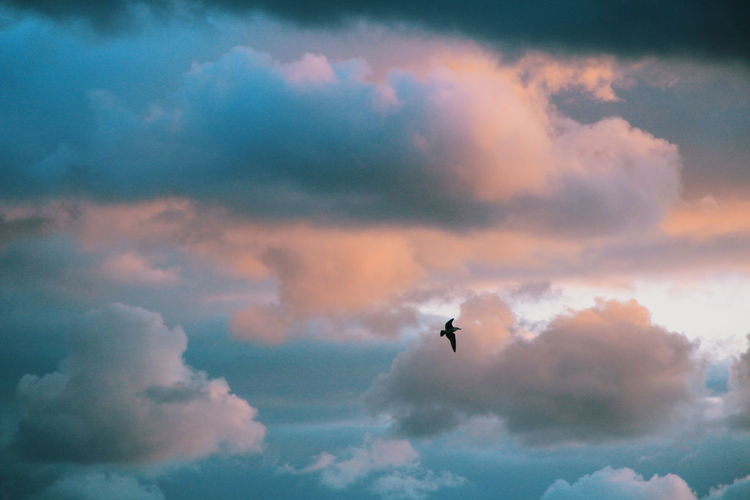 Low angle view of silhouette bird flying against cloudy sky during sunset