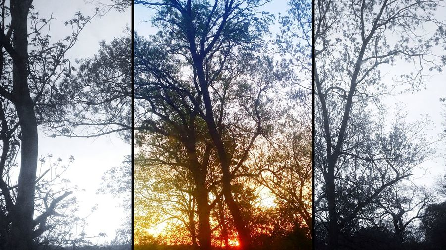 Taking Photos Horizon Sunrise Trees Nature Background Darkness And Light Splitpic