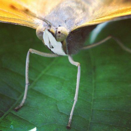 Berjemur. Foto By Marlon. Butterfly Kupukupu Macrophotography Macro insectagram insect serangga
