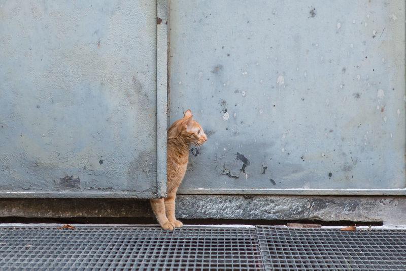 Curious Cat Looking Away