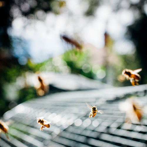 Honeybees flying over metal