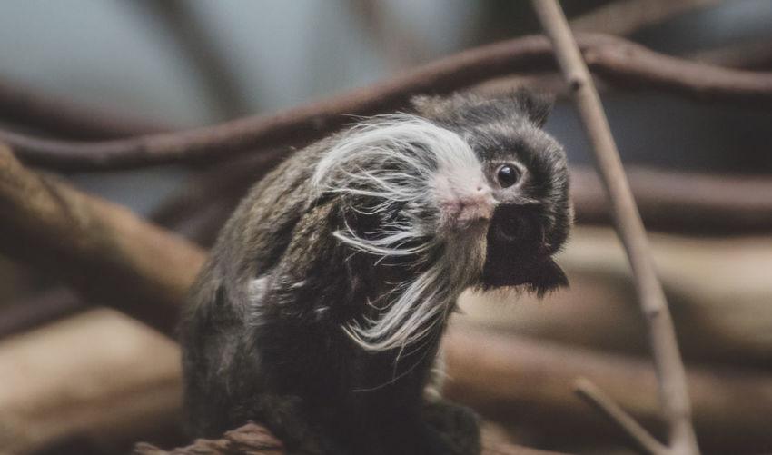 Close-up of portrait of monkey on tree