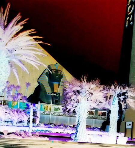 Spinx Pyramid Palm Trees Las Vegas The Las Vegas Strip The Strip Viva Las Vegas