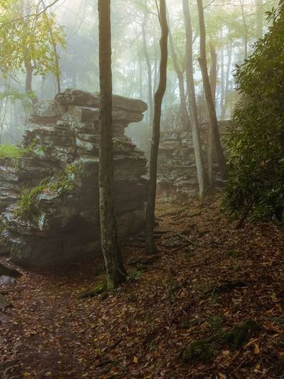 Foggy Day at Grand View State Park in West Virginia..