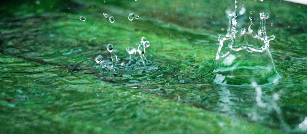 splash Close-up Day Green Nature No People Rain RainDrop Raindrops Splashing Watedrops Water