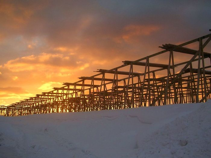 Cranes on snow covered land against sky during sunset