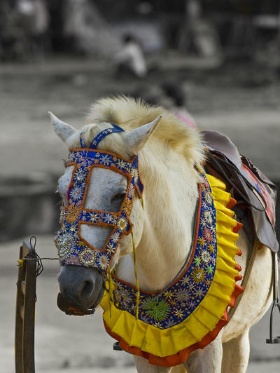Close-up of horse tied up