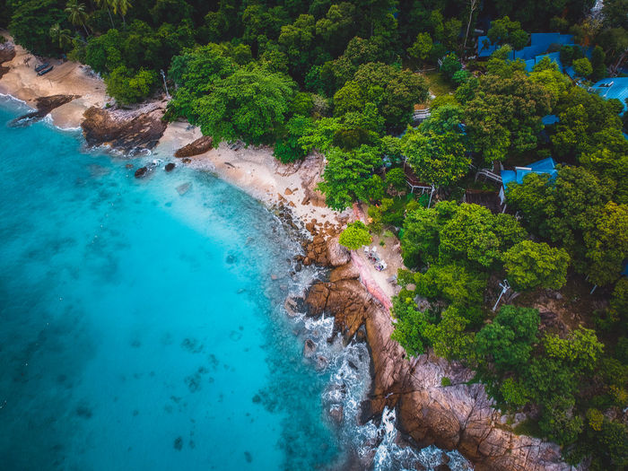 Aerial view of sea shore by forest