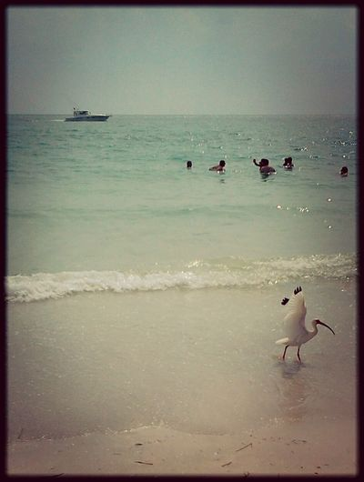 Life Is A Beach Enjoying Life Pastel Power Ocean Tropical Paradise Landscapes With WhiteWall Beach Beach Photography Oceanside Ocean Bird Boat