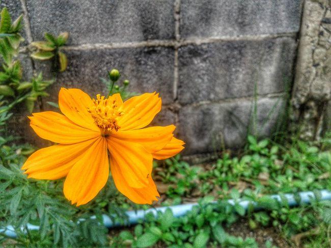 Flower Growth Petal Flower Head Fragility Plant Nature