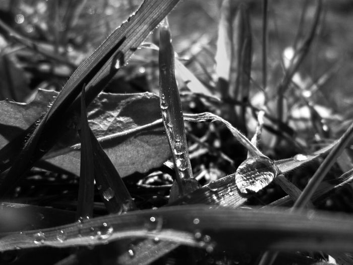 After the rain! Bw_collection Macro_collection Nature_collection EyeEm Best Shots